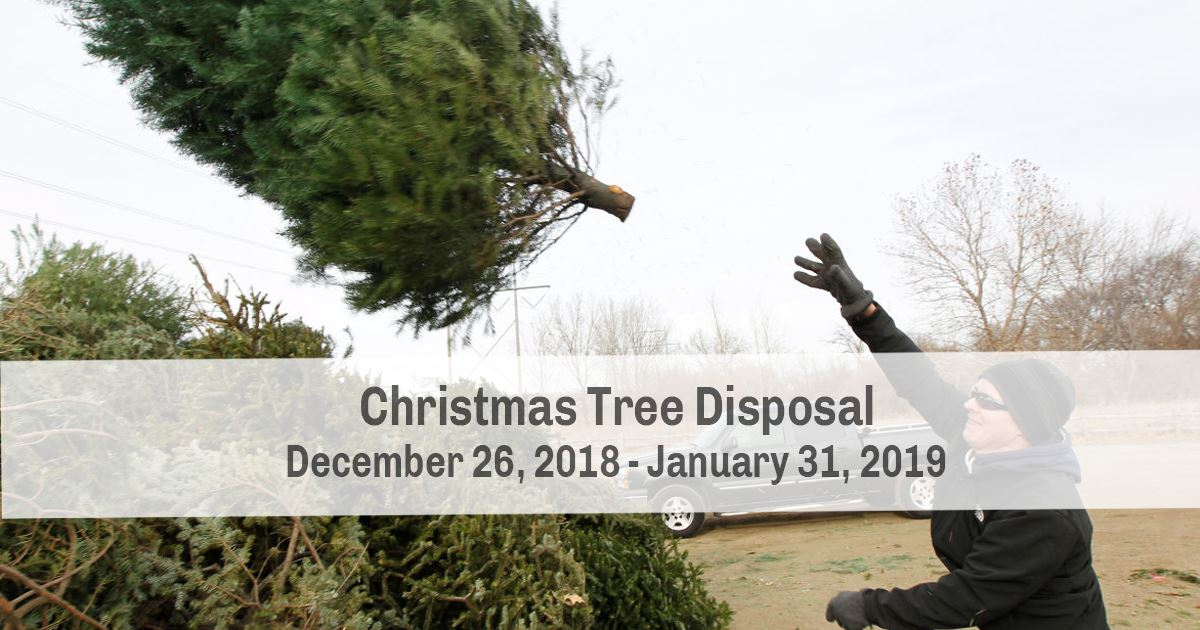 The City&#39s Christmas tree collection and recycling program offers residents an environmentally se